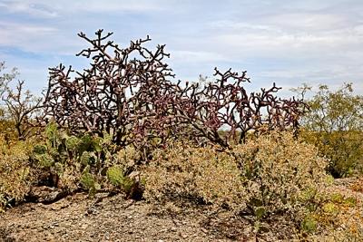 Red Cactus.jpg